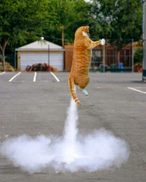 Gato en el aire que parece tener un cohete en la cola
