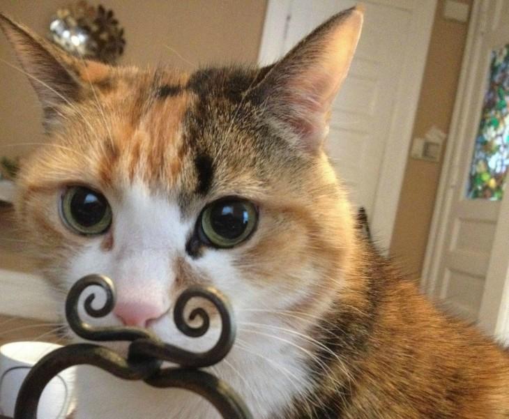 Gato que con un mueble parece tener unos bigotes