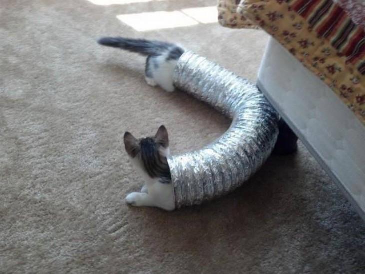 un gato que esta dentro de un tubo gris