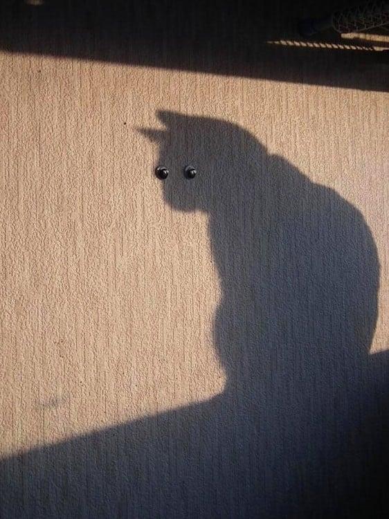 sombra de un gato en la pared con dos ojos