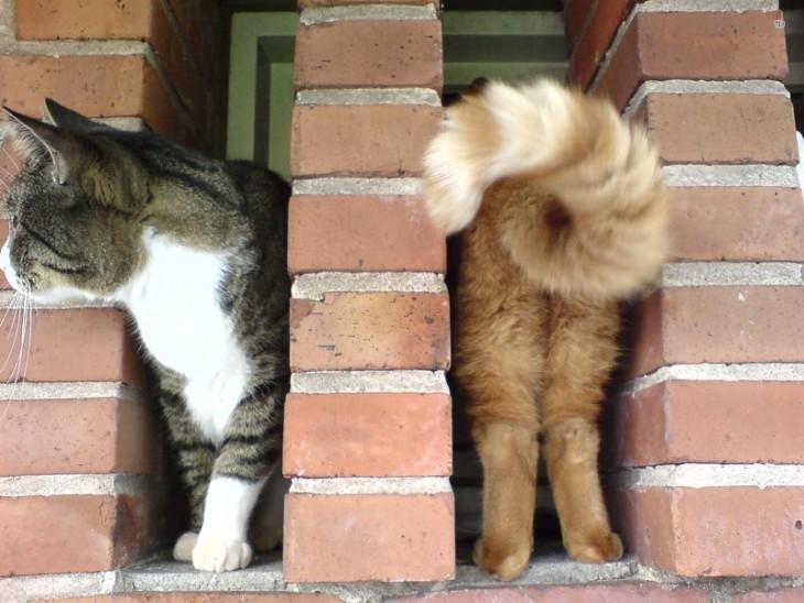 gato de dos colores asomándose por una rendija