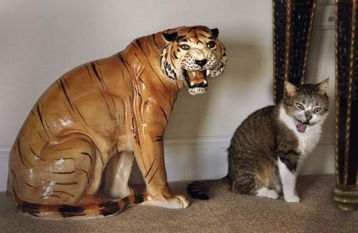 gato imitando una figura de un tigre que esta a un lado de él