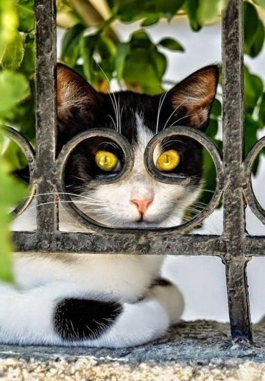 Cara de un gato detrás de un barandal de una casa