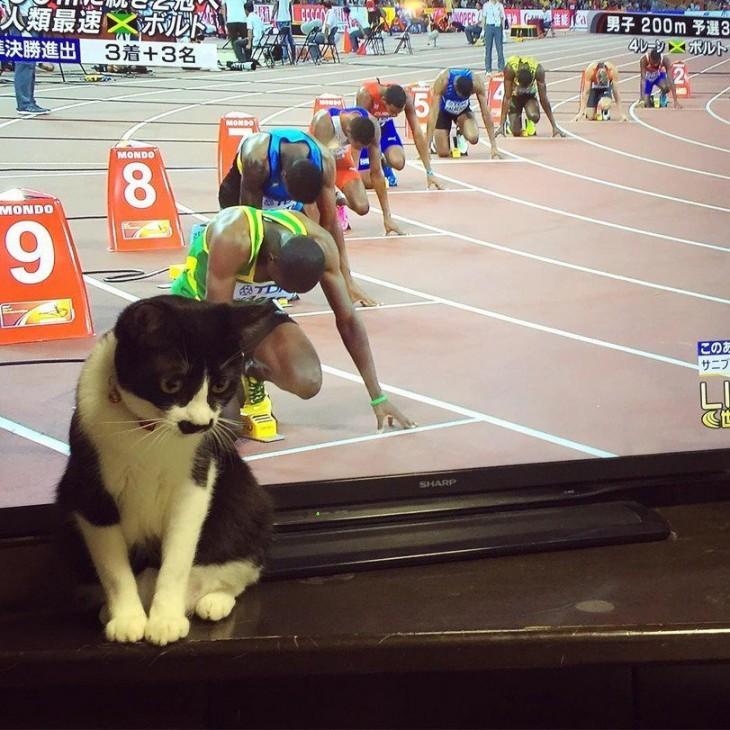gato sentado frente a una televisión con una imagen de personas antes de empezar una carrera de atletismo
