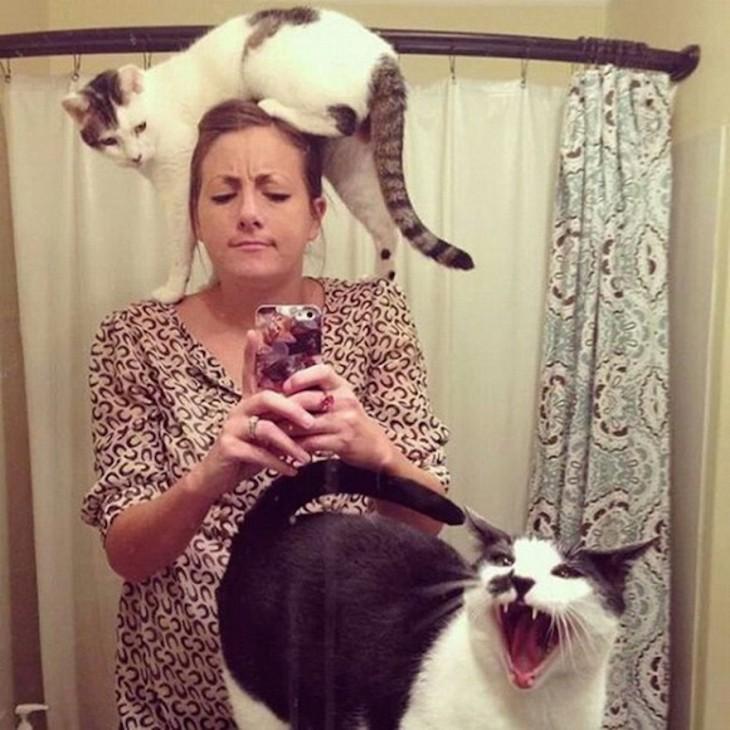 gatos peleando por la dueña mientras se toma una selfie