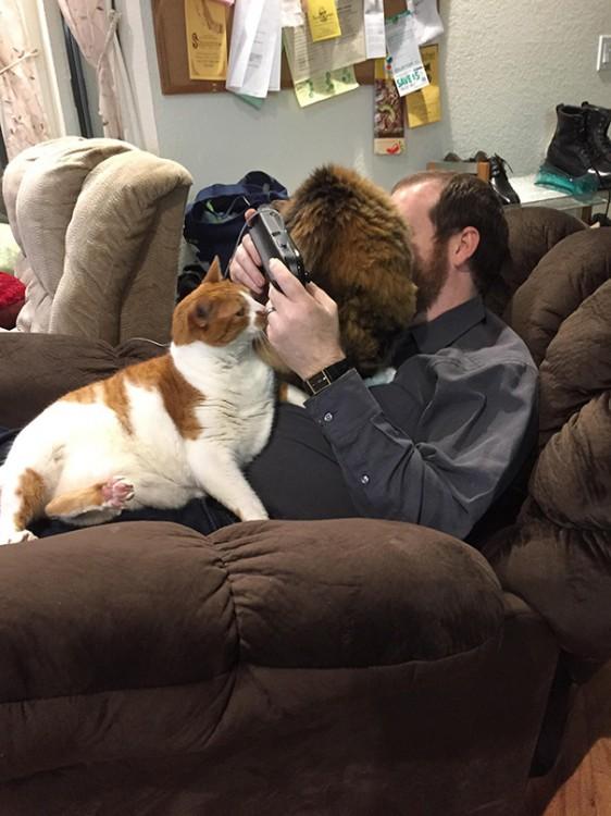gatos no dejan jugar a su dueño
