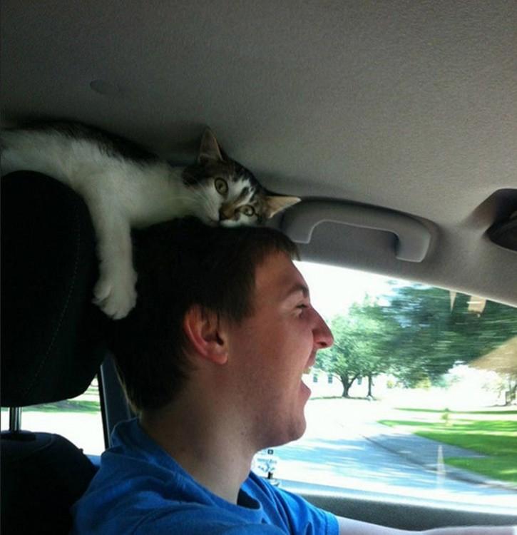 gato encima de la cabeza del chavo mientras va manejando