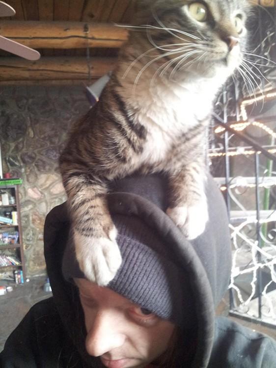 gato encima de la cabeza de su dueño