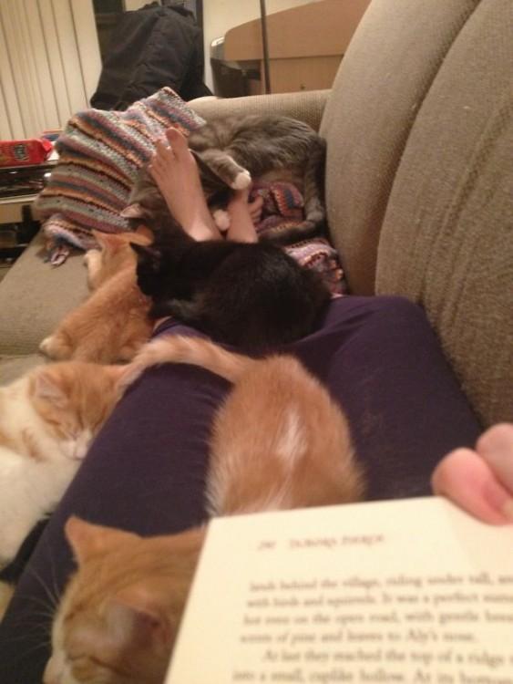 Gatos encima de las piernas de su dueña