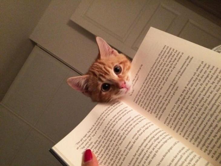 gatito pidiendo atención a su dueña y le baja el libri con la cabeza para que le ponga atención