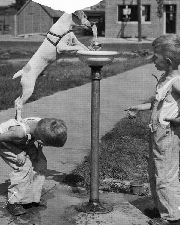 niños jugando a darle de tomar agua a ssu perrito