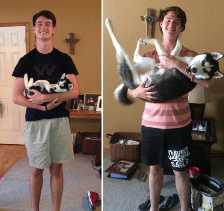 perro husky de un años de diferencia