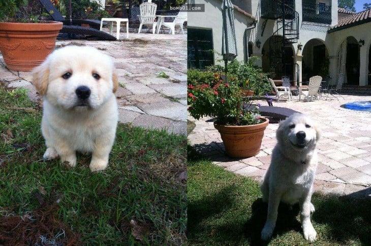 perro con 9 meses de edad