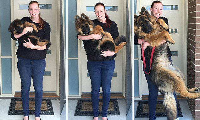 así es como ha crecido este perro