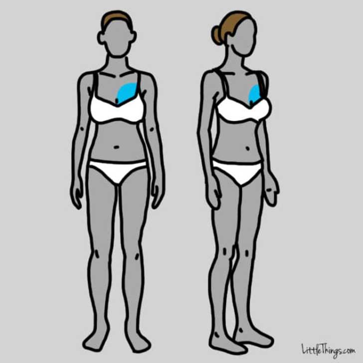 dos dibujos que tienen resaltado el área del corazón