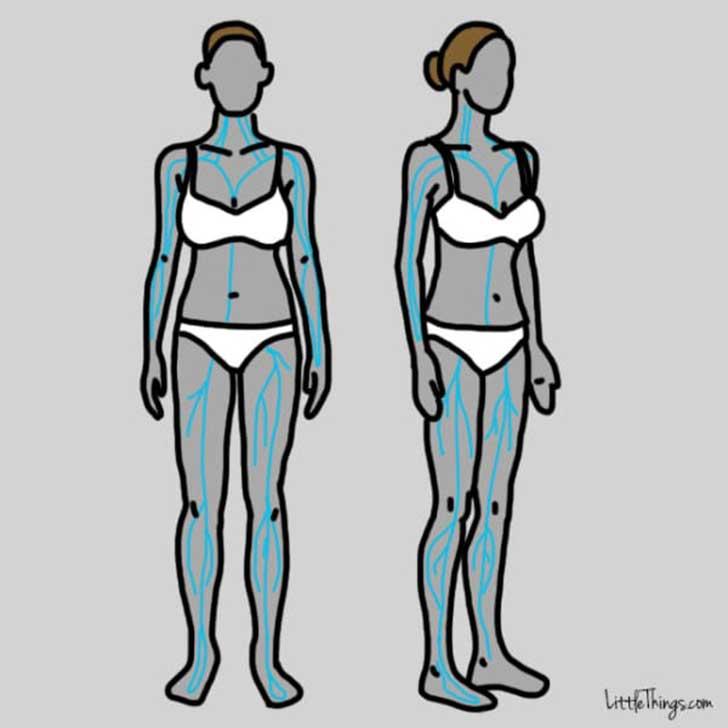 cuerpos de dos mujeres en dibujos que muestra la presión sanguínea