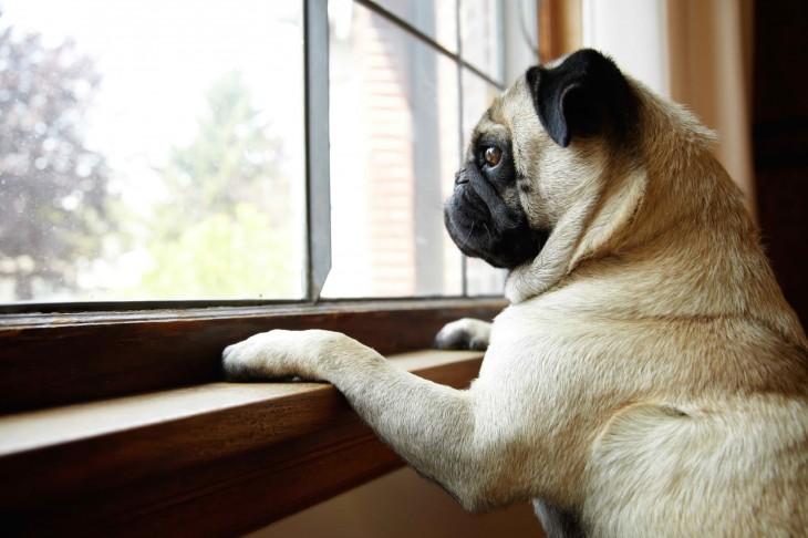perro mirando por la ventana a su dueño