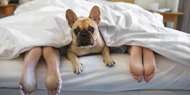 perro duerme en la cama con sus dueños