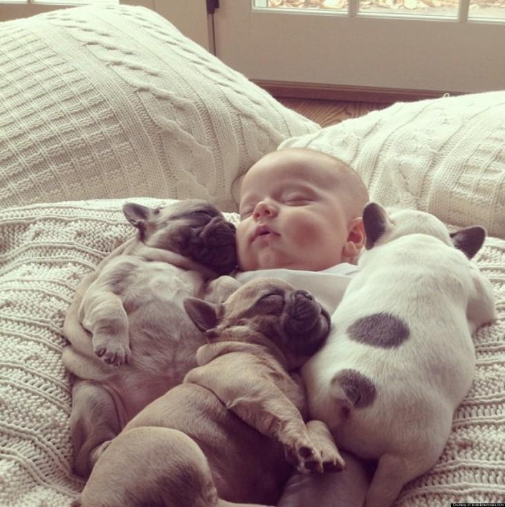 cachorros y bebé dormidos