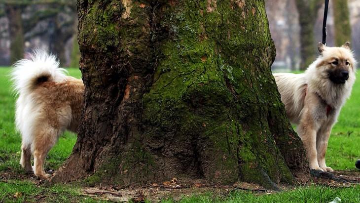 foto de un perro que esta dividido en dos partes entre un tronco de un árbol