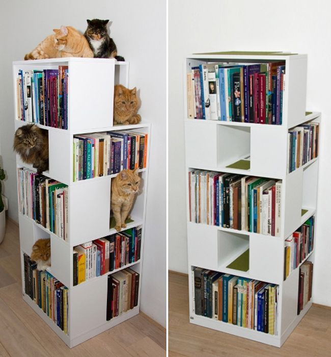 utilizsa libreros con espacio para los gaatos