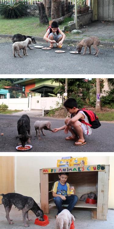 niño creo un refugio en su cochera para proteger a los perro del hambre y el frio