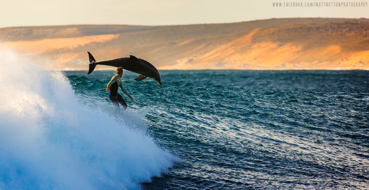 hombre nadando junto a un delfin