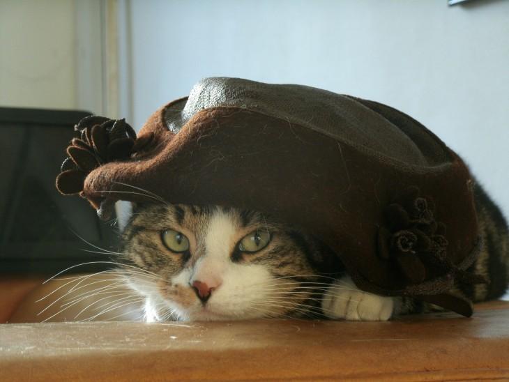 gato escondido bajo el cojin del sofa