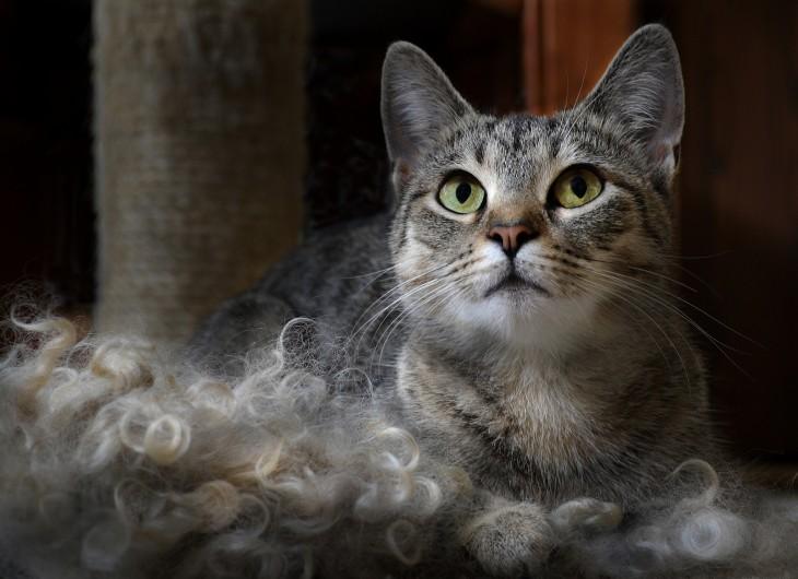 gato con sus orejas enderezadas