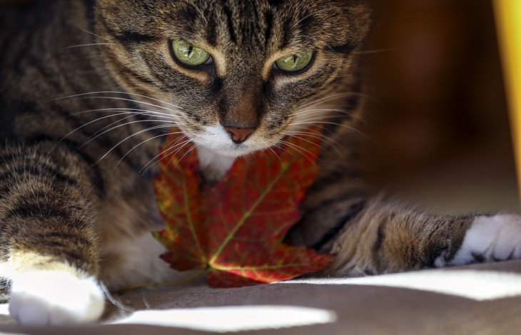 los gatos tienen huellas dactilares en sus narices