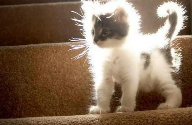 gato con electricidad estatica