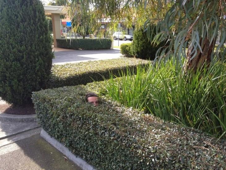 hombre jugando a las escondidas en un árbol cuadrado