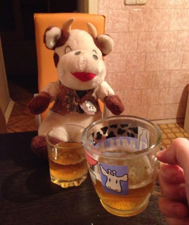 vaquita tomando cerveza con su dueño