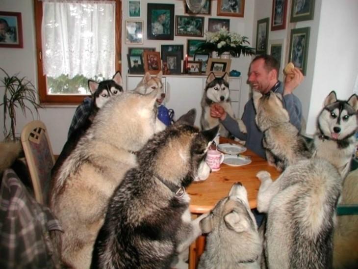 perros comiendo en lamesa con su dueño