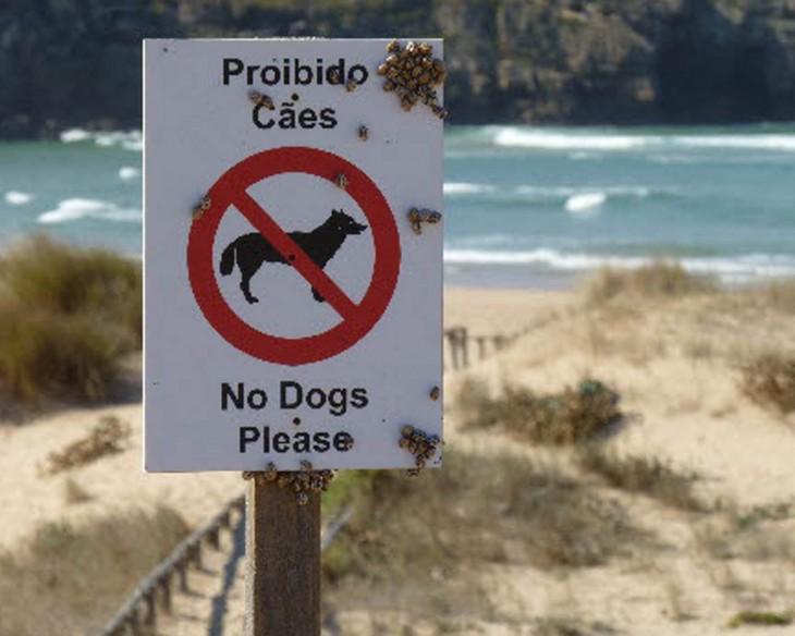 señalamientos de no perros en la playa