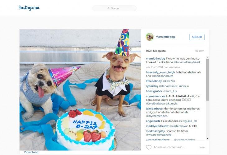 cuemta de instagram de un perrito famoso