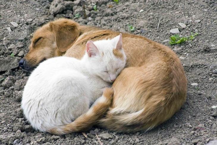 união adorável entre u nperro e um gato dormindo