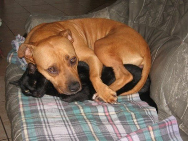 Que abraça o cão gato do sono