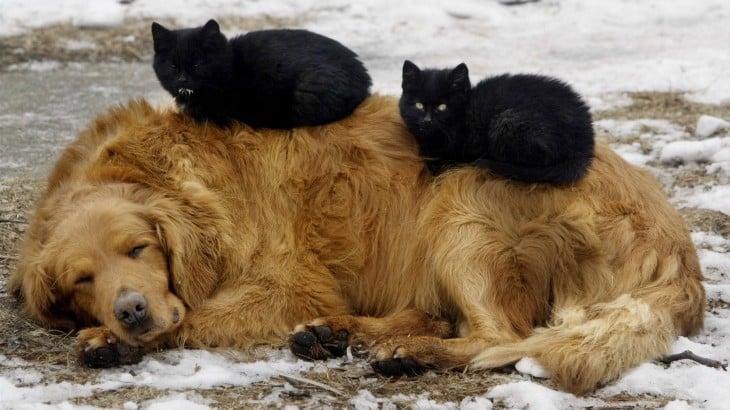 Uma cama de casal.  Cão dorme com dois gatos pretos acima.
