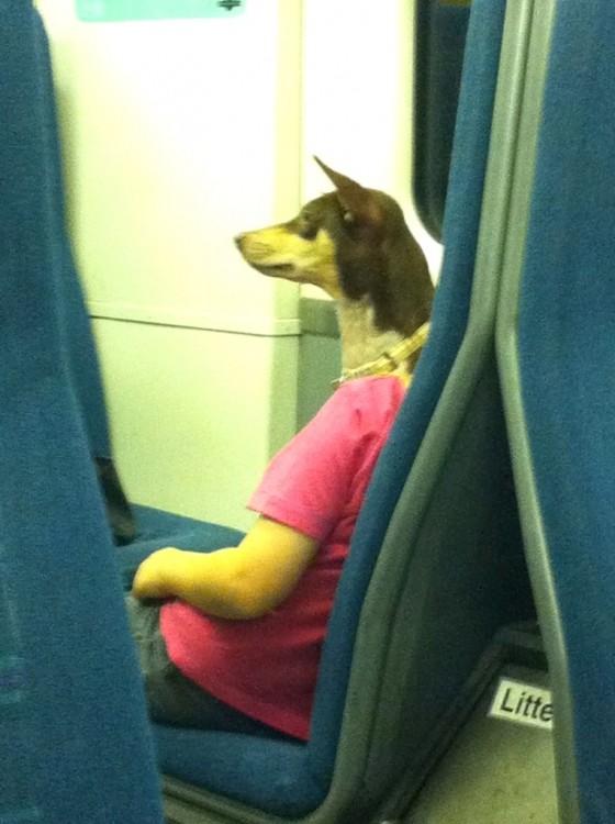 parece que un perro va viajando en el avión
