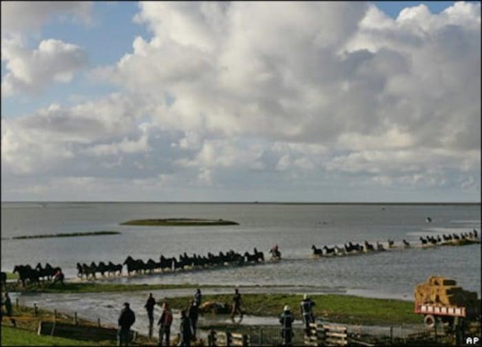 Personas salvando a algunos caballos en Marrum, Holanda