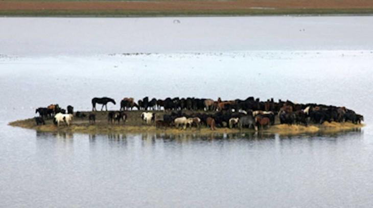 caballos atrapados en medio de una isla en Holanda