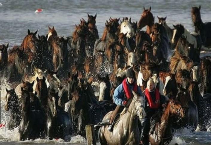 dos mujeres cabalgando y guiando a otros caballos hacia tierra firme en Holanda