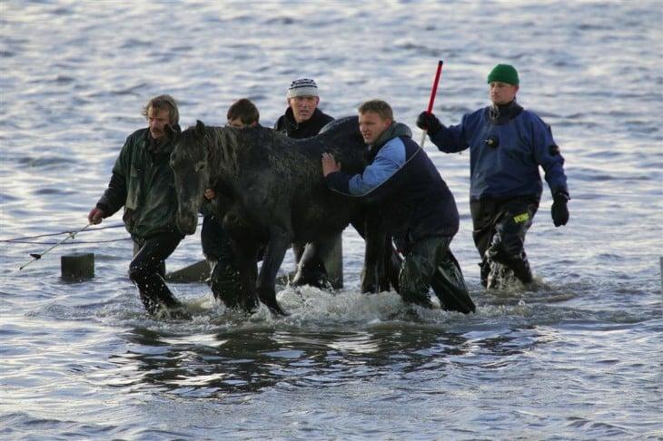 hombres escoltando a un caballo en medio del mar en Holanda