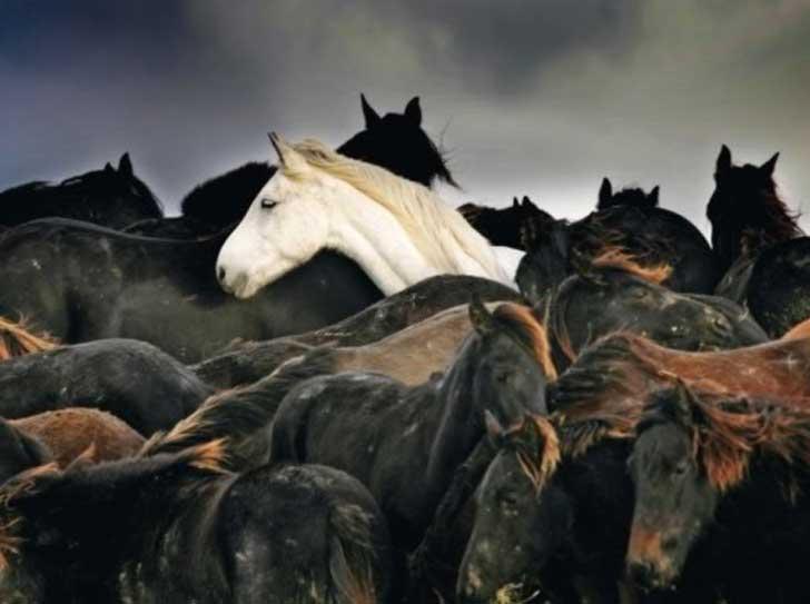caballos juntos en medio de una isla