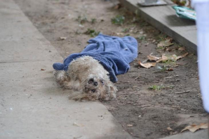 perrita tirada en la calle envuelta en una toalla azul