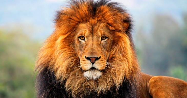 cabeza de un león