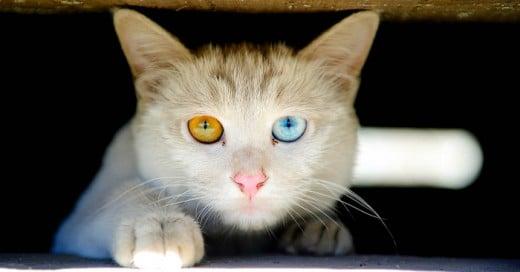 Estos son 17 secretos que todo gato tiene