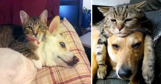 Estos gatos se aprovechan de la nobleza de los perros