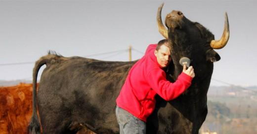 Este hombre y su mejor amigo.. su Toro de Lidia